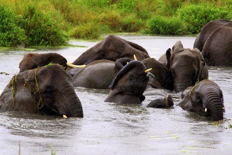 Elephants enjoy a watering hole