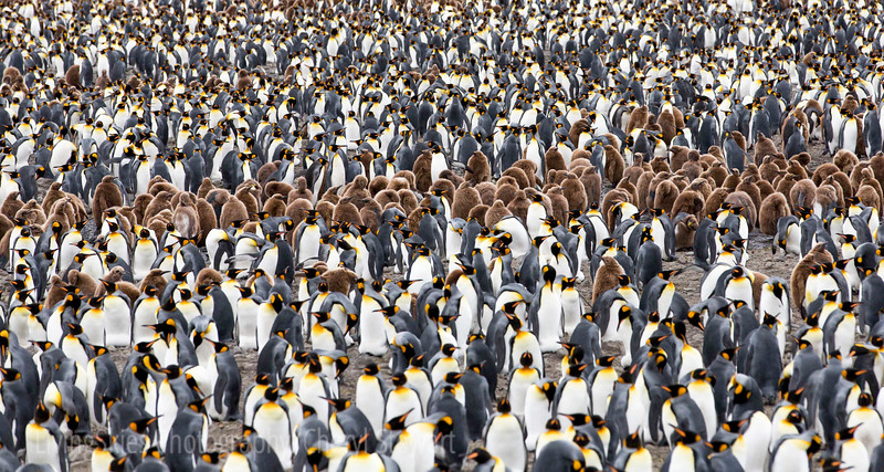 Penguin's fill the Beach