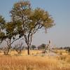 1609_Botswana_085