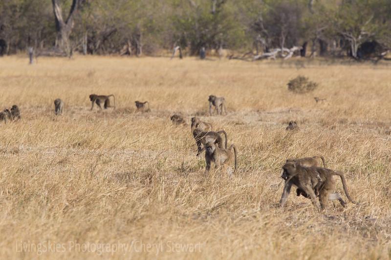 1609_Botswana_007