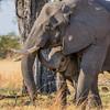 1609_Botswana_070