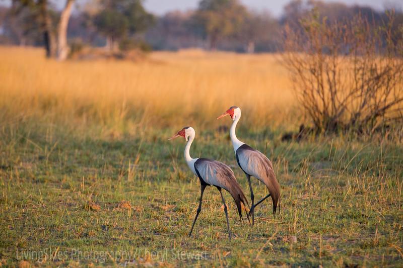 1609_Botswana_327-3