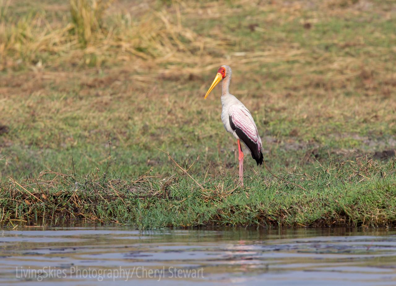 1609_Botswana_270-3