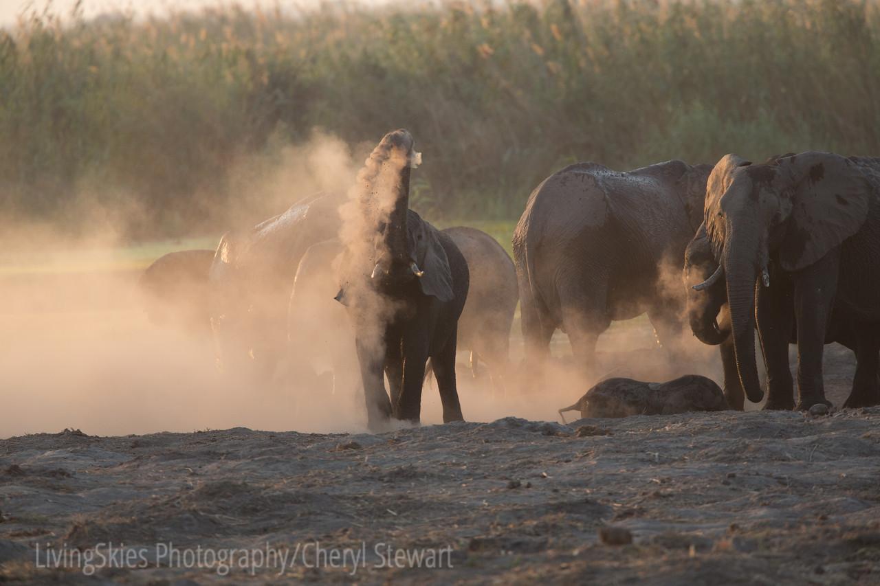 1609_Botswana_089-2