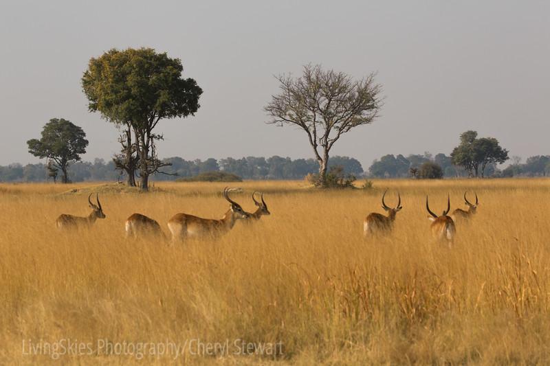 1609_Botswana_346-2