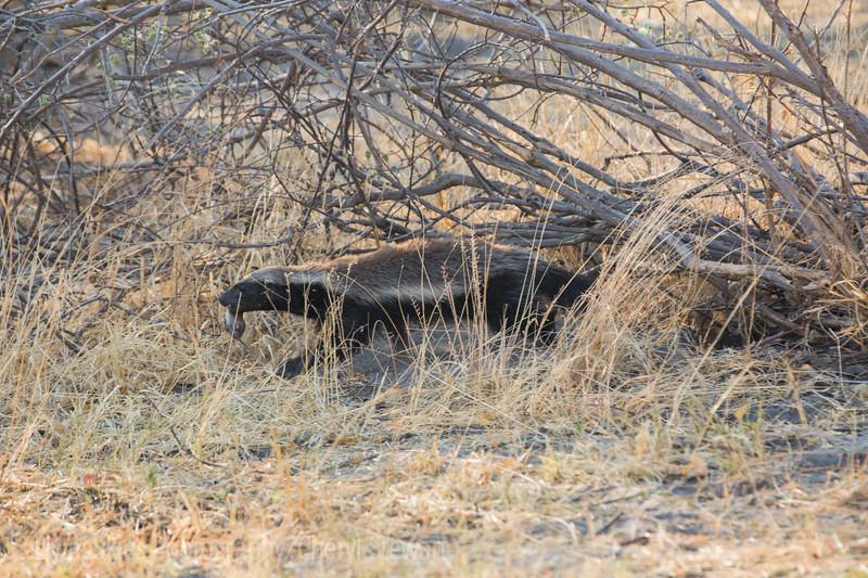 1609_Botswana_180-2