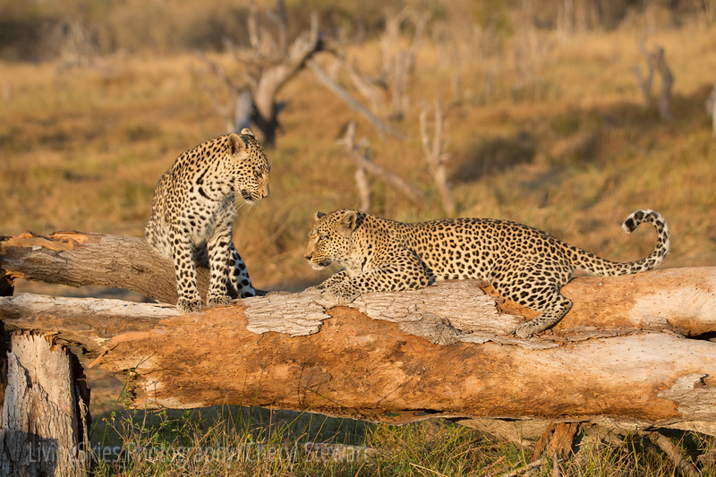 1608_SouthAfrica_176
