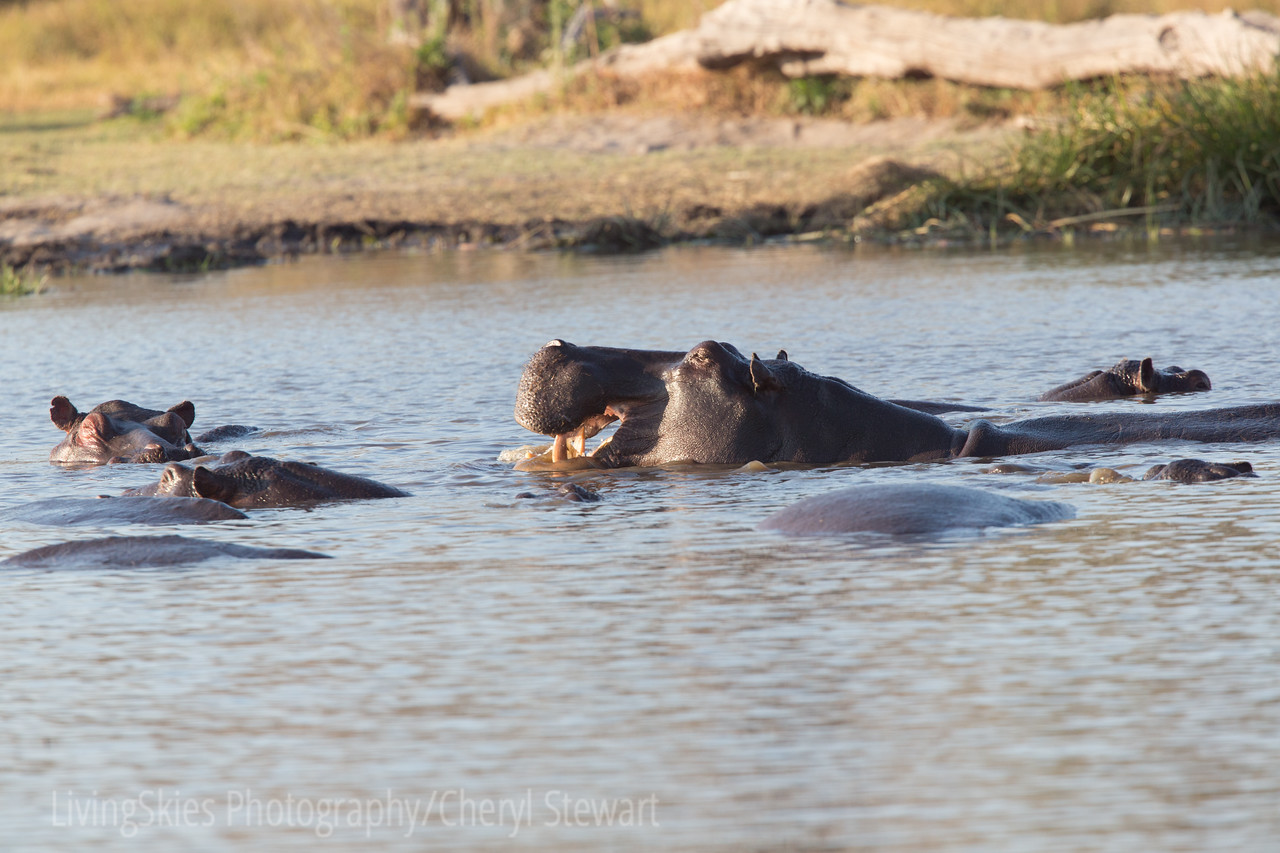 1608_SouthAfrica_166-2