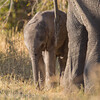 1609_Botswana_102