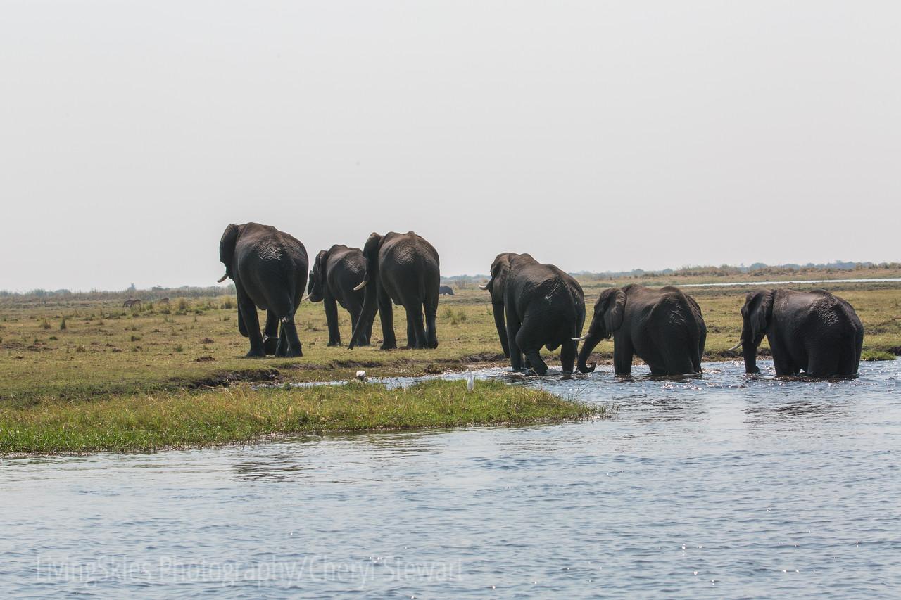 1609_Botswana_174