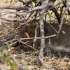 1609_Botswana_108-2