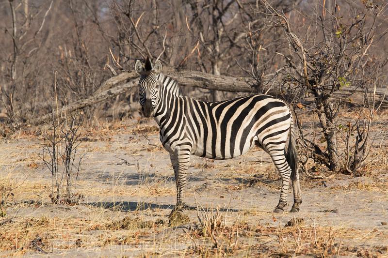 1609_Botswana_639