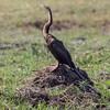 1609_Botswana_346