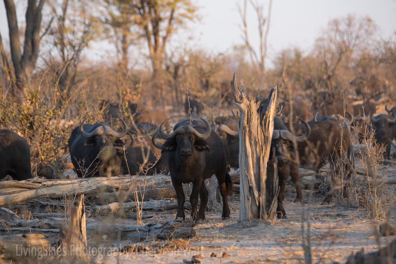 1609_Botswana_751