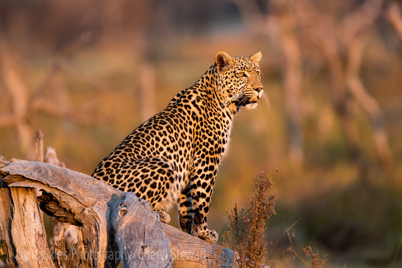 1608_SouthAfrica_400-2