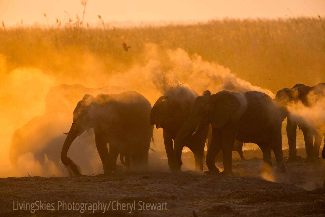 1609_Botswana_146