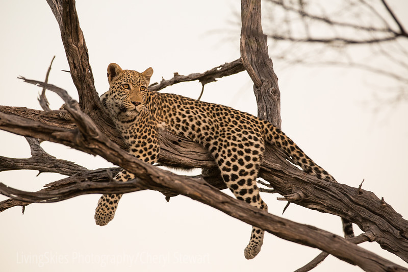 1608_SouthAfrica_317