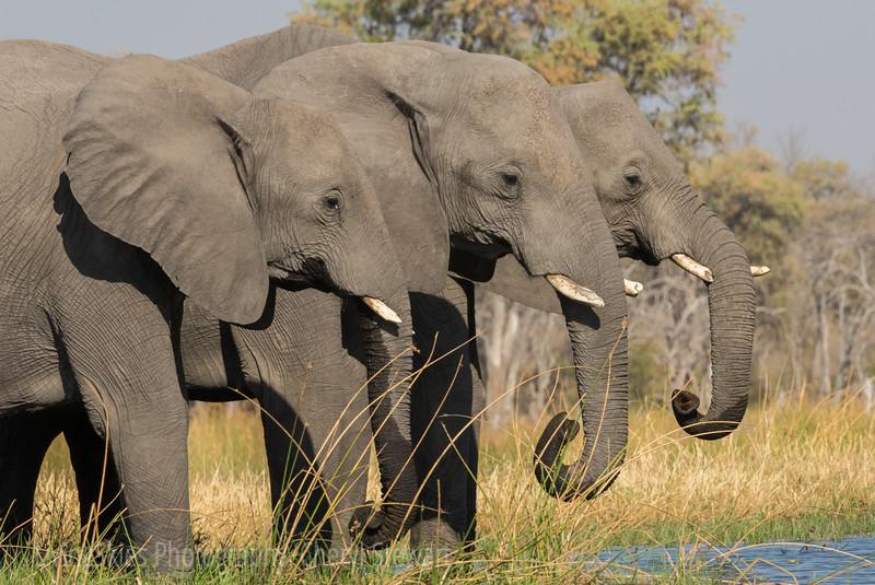 1609_Botswana_362