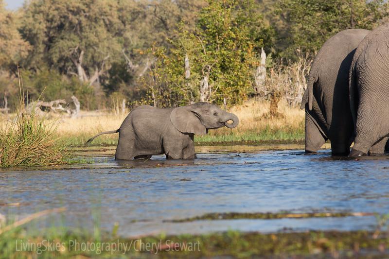 1609_Botswana_177