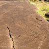 Papa Vaka - stone petroglyphs