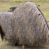 Hare paenga - An example of Houses made in the shape of an overturned boat and covered with thatched grasses