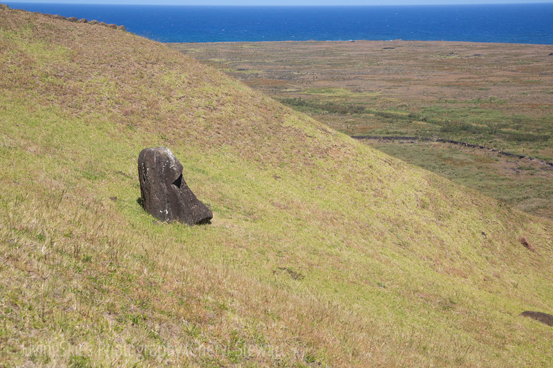 "Rano Raraku - as the moai were finished, they were moved from the ""quarry"" to various locations on the island.  Shifting earth has buried many, and this one probably has a full body beneath it."