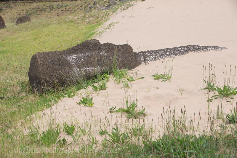 Toppled Moai at the beach in Anakena