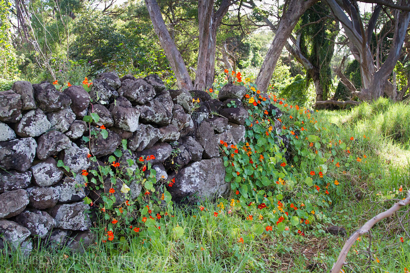 Stone walls are everywhere, sometimes it's hard to tell what they were originally
