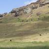 Rano Raraku Wild horses & moai on the hillside