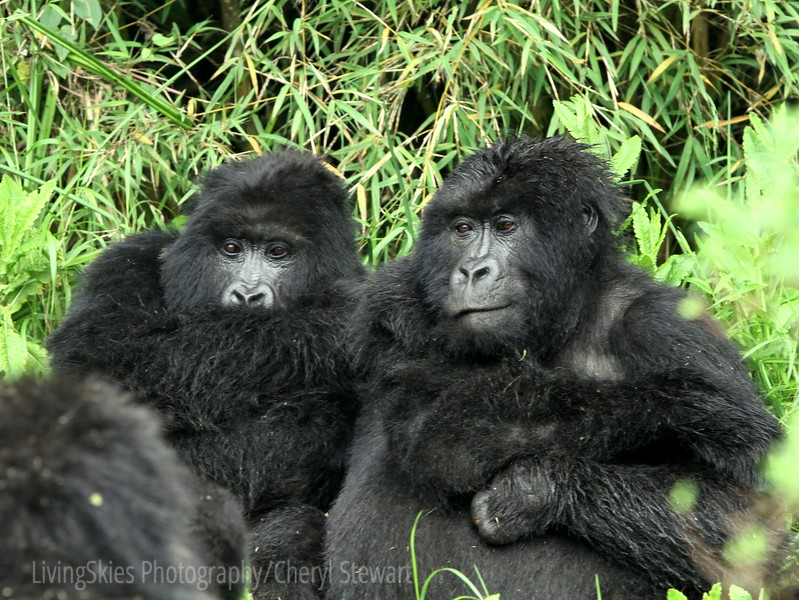 """""""the girls""""  <br />  the lady on the right is missing her fingers, probably from a poachers snare"""