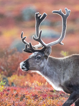 Arctic Photography Workshop NWT 2019