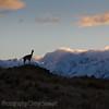 1104_Patagonia_003
