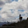 1104_Patagonia_182