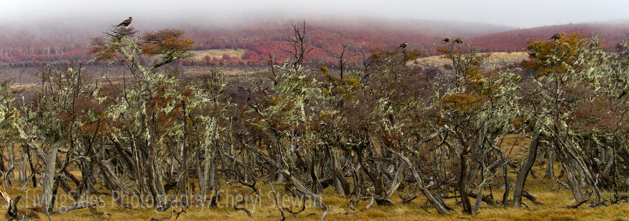 1104_Patagonia_073