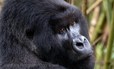 Rwanda Photo Trip 2012
