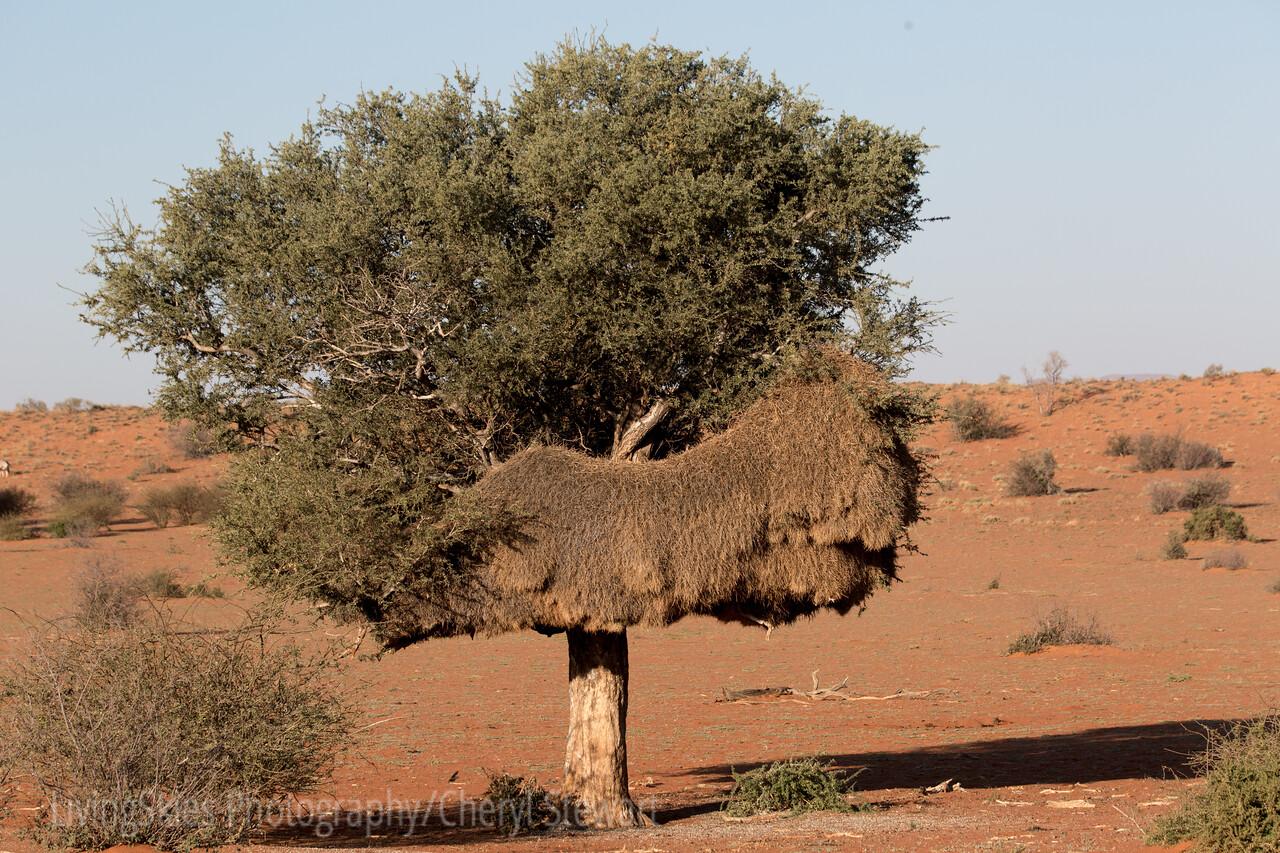 1608_S-Africa_643