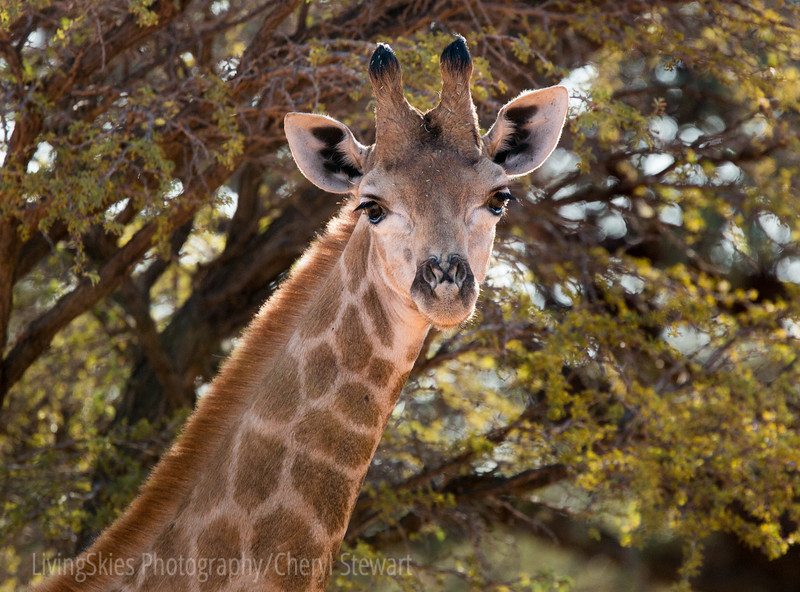 1608_SouthAfrica_032-2