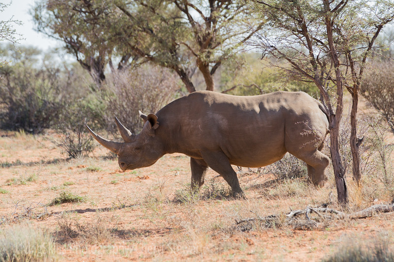 1608_SouthAfrica_379