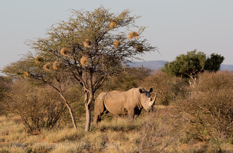 1608_SouthAfrica_483