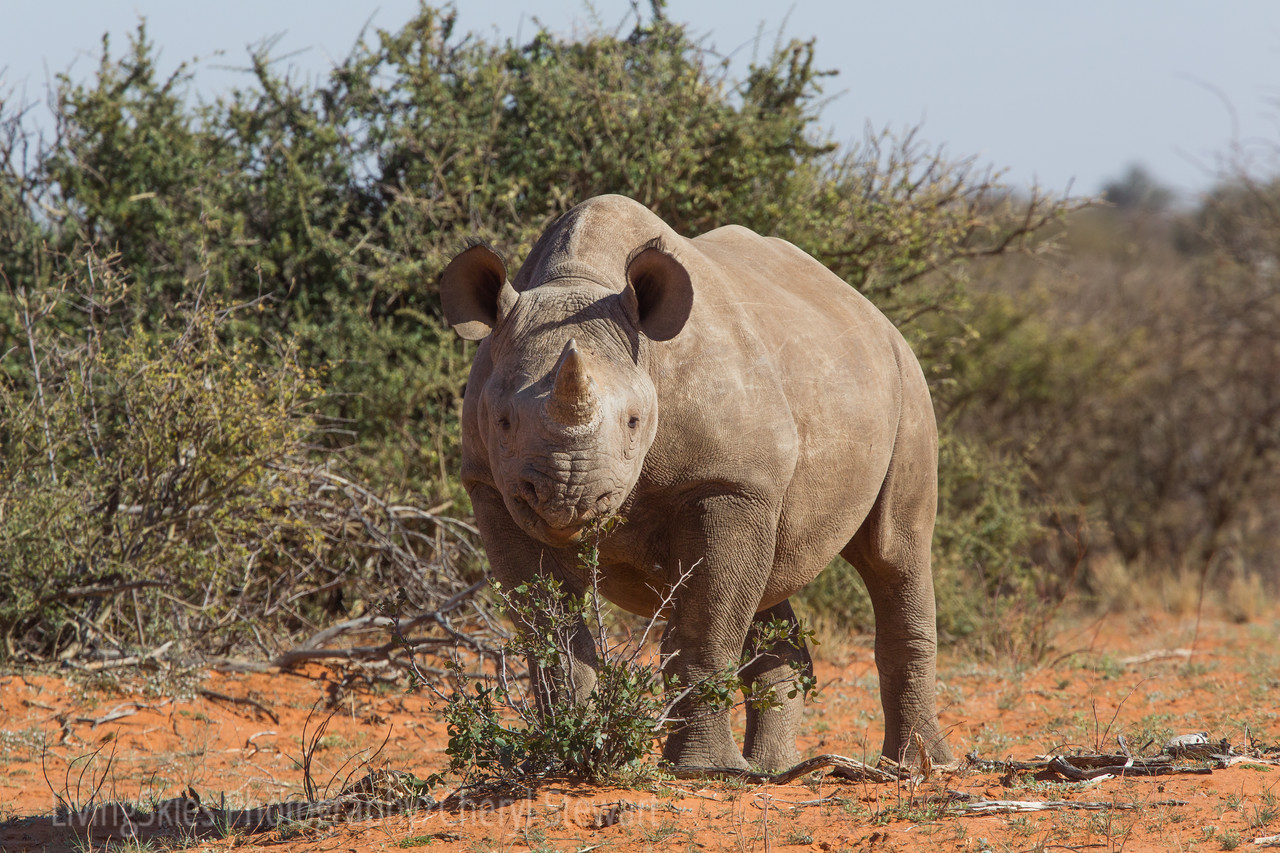 1608_SouthAfrica_422-2