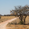 1608_S-Africa_142-2