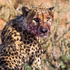 1608_SouthAfrica_012-2