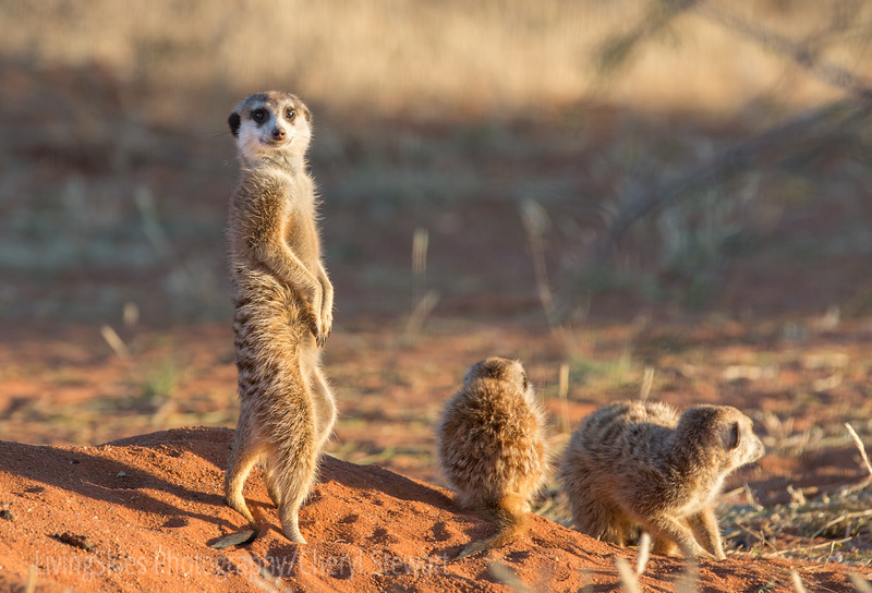 1608_SouthAfrica_024