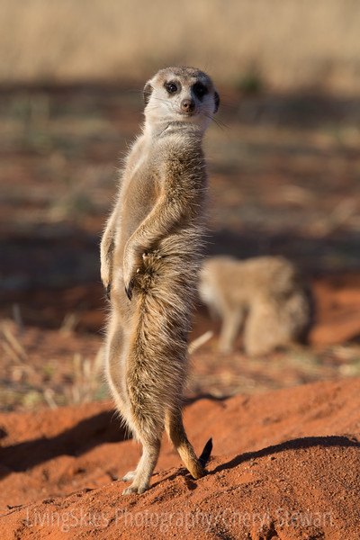 1608_SouthAfrica_215