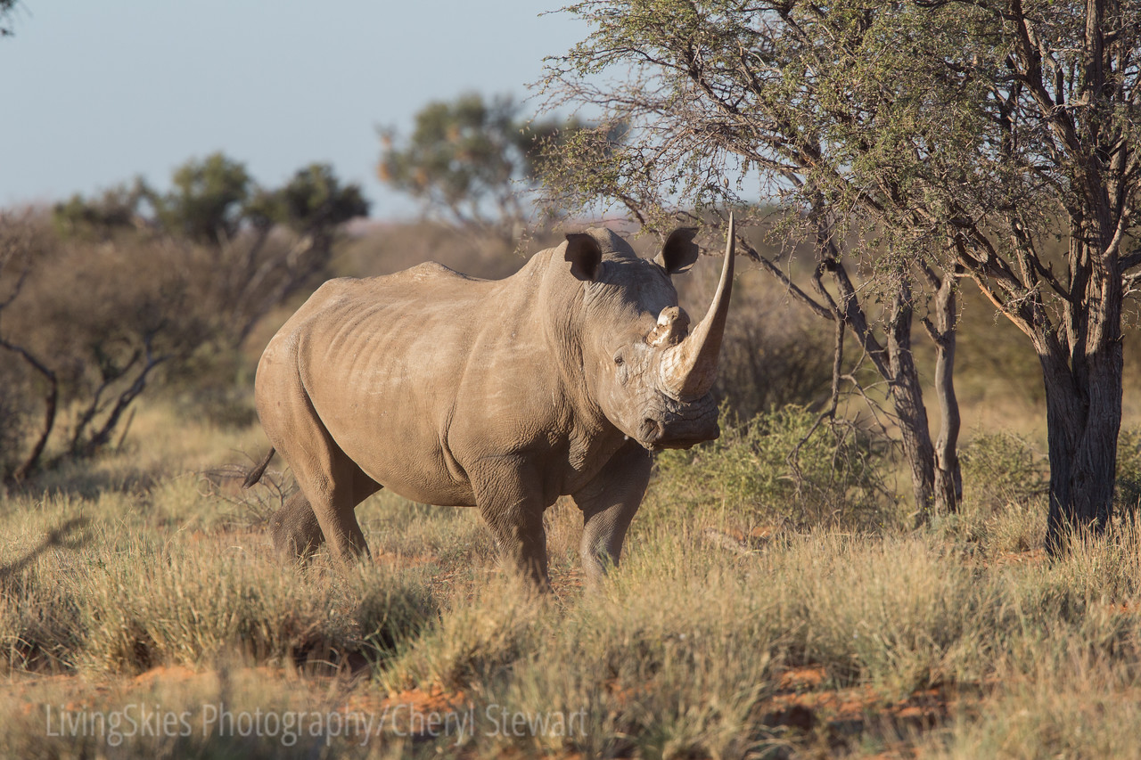 1608_SouthAfrica_681