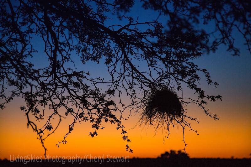 Birds nest & sunset