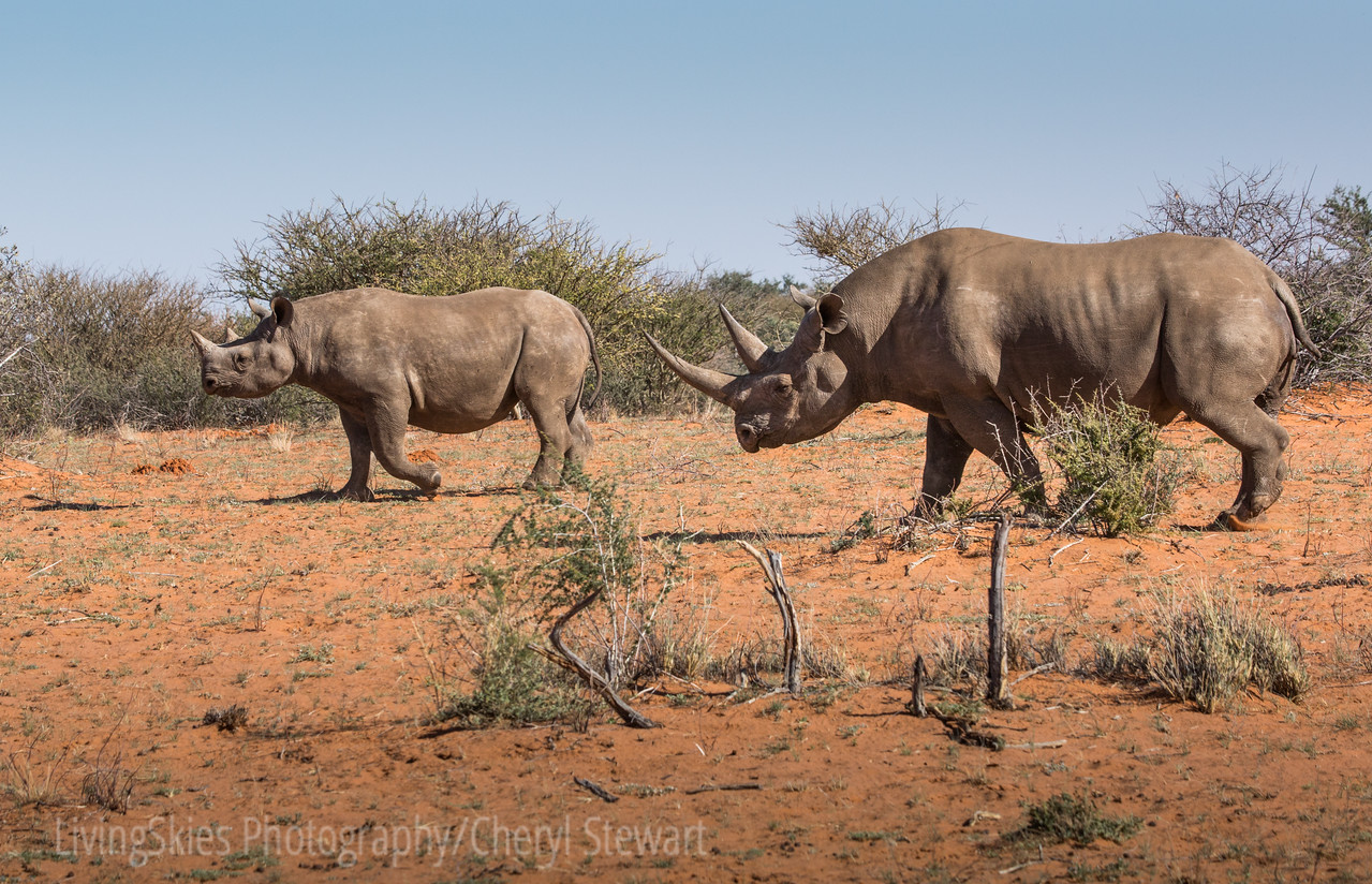 1608_SouthAfrica_386