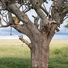1804_Tanzania1_123
