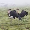 1804_Tanzania9_377