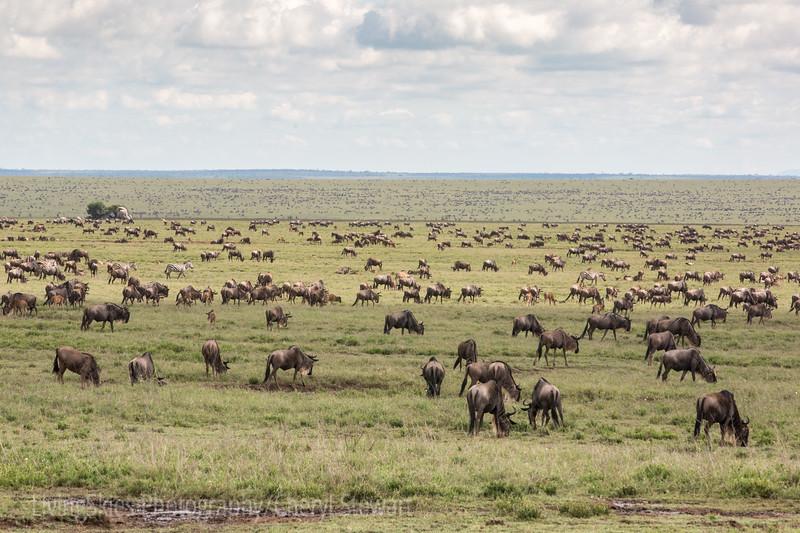 1804_Tanzania1_507
